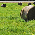 Photos: The Bales in the Field