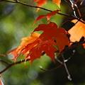 Maples 10-11-10