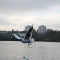 Flying Catch