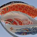 魚眼で見る鯉のぼりCSC_8546