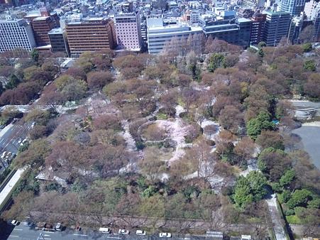 都庁から見た新宿中央公園