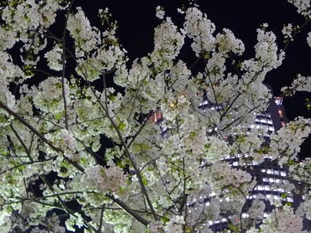 100331-名古屋駅夜景色 (2)