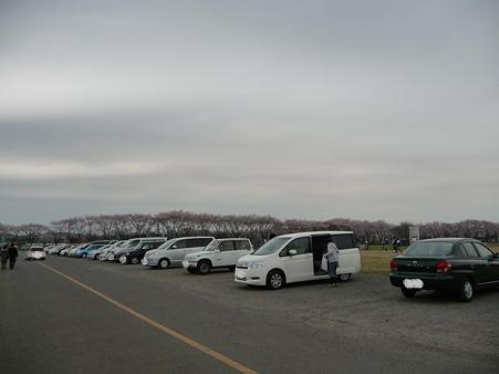 100404-海軍道路の桜 (49)