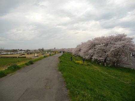 100411-熊谷桜堤 (40)