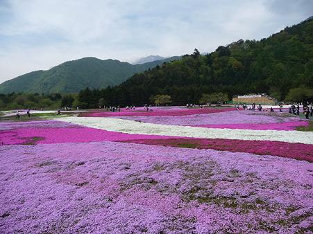 100518-富士芝桜まつり-68