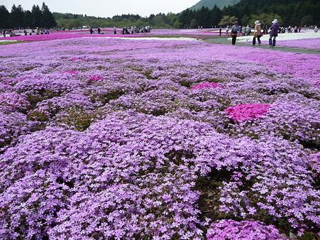 100518-富士芝桜まつり-72