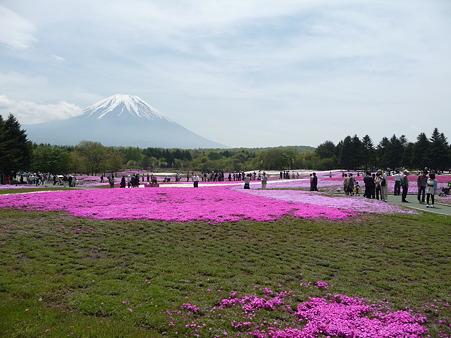 100518-富士芝桜まつり-77
