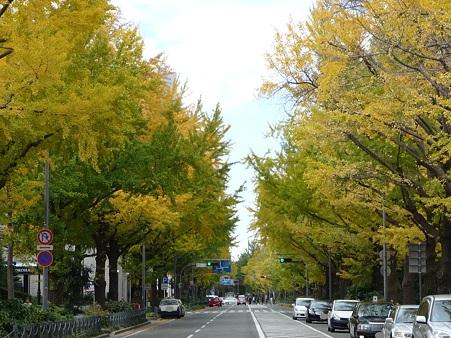 101119-紅葉 山下公園通り (29)