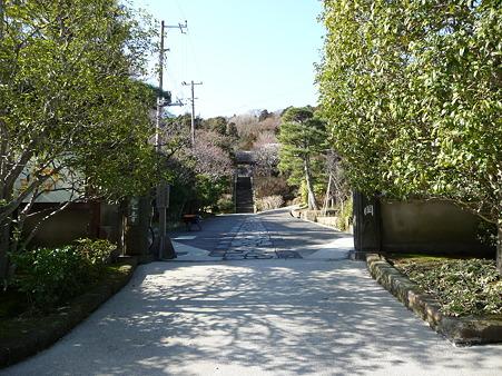 110225-東慶寺  (1)