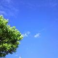 写真: 今日の空