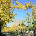写真: 秋の空1