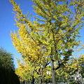 写真: 秋の空3