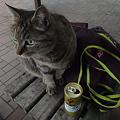 Photos: DSC01165+1 猫カフェ