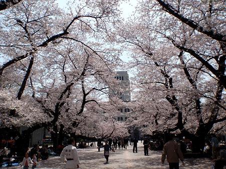 東京工業大学大岡山キャンパス ウッドデッキ 桜並木