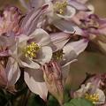 写真: 201104flower 488
