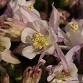 写真: 201104flower 504