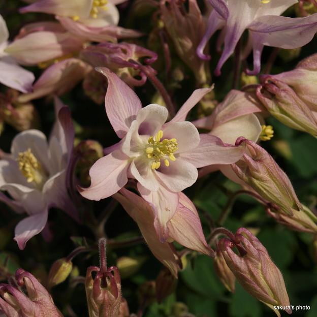 写真: 201104flower 505