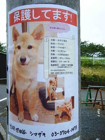 迷い犬ポスター