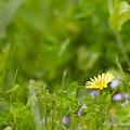 Photos: あぜ道に咲く花
