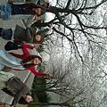 写真: 体育館横の桜きれいだったね...