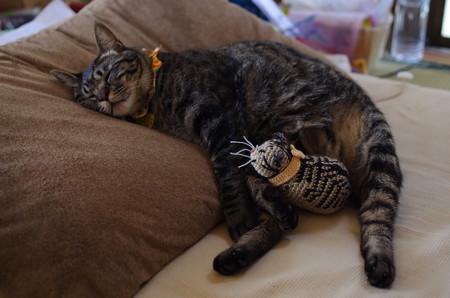 俵猫と添い寝