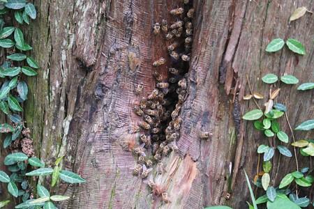 2014.07.03 追分市民の森 ミツバチの家