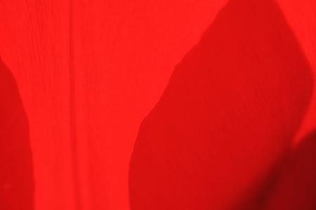 2010.04.26 和泉川 チューリップ