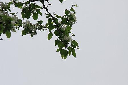 2010.05.22 白布温泉 ヤマナシ