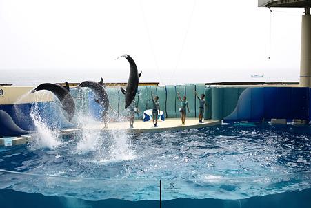 2010.07.06 江ノ島水族館 -6
