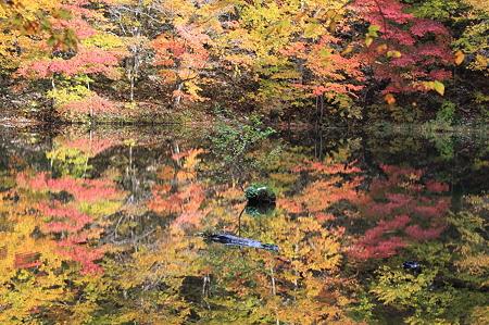 2010.10.28 蔦温泉 菅沼 紅葉
