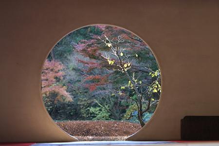 2010.11.29 鎌倉 明月院