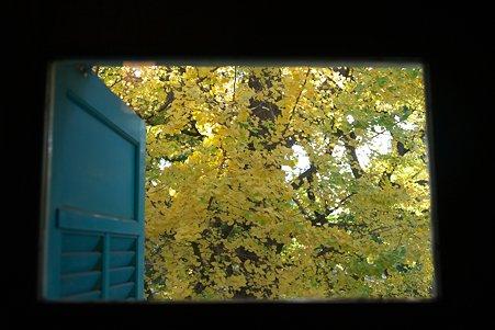 2010.12.08 山手 エリスマン邸 世界のクリスマス2010 スイス 窓