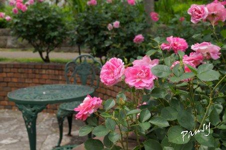 rose garden..20