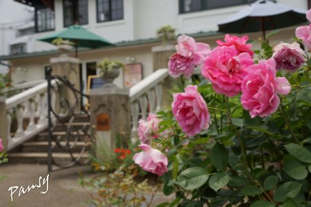 rose garden..21