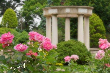 rose garden..22