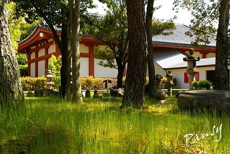 草の緑と・・奈良 薬師寺にて・・2