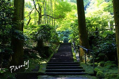 緑陰の石段・・