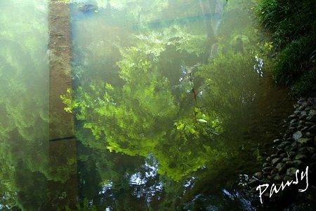 池に映して・・明月院 後庭園にて・・22