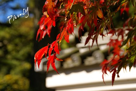 red and white..紅葉の三渓園・・15