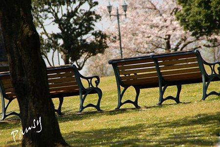 桜景色・・3