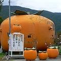 Photos: 大きい柿・・・。
