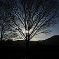 写真: 朝日を撮ってみた