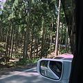 Photos: 木がガードレール代わりや~