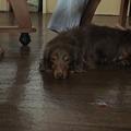 Photos: やっぱりテーブルの下が好き