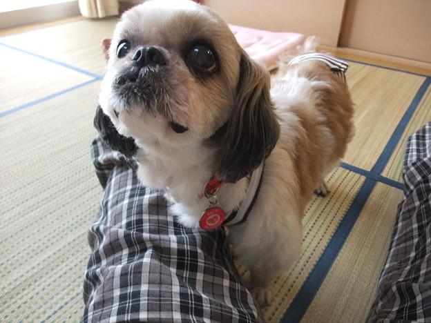 Photos: むっちゃくちゃ美人さん!