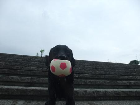 やっぱりボール最高!(川じゃなくてボールかい!)