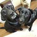 Photos: 犬が大好きな葵ちゃんです♪