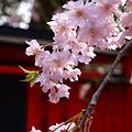 写真: 神域の春_2011