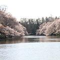 Photos: 100408-5井の頭公園