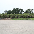 Photos: 100513-42九州ロングツーリング・ソテツ?